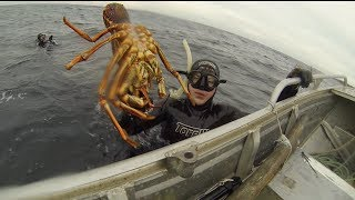Harvesting Tasmania: Lobsters, Abalone, Sea Monsters! (Breath hold diving)