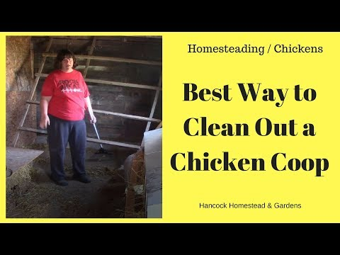 homesteading-skills-for-beginners:-keeping-chickens:-best-way-to-clean-out-a-chicken-house
