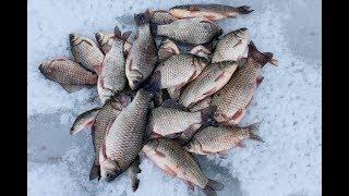 ОГРОМНЫЕ КАРАСИ АТАКУЮТ МОРМЫШКИ!!! Эффектные поклевки! Рыбалка со льда
