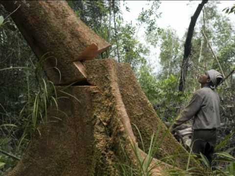rainforest depletion caused by logging thesis statement