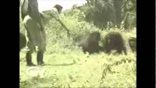 animal attacks compilation
