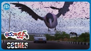 Action 3D Movie Scenes | Allari Naresh and Friends Haunted by Crows - Comedy Scene | Shyam | Vaibhav