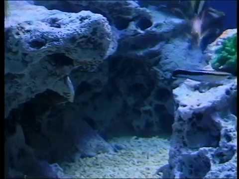 Vancouver Aquarium 1998