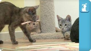 Kittens Love Straws - Kitten Love