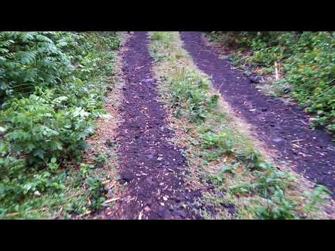 Comoros Travel & Tourism - Country Side Road Through Forest
