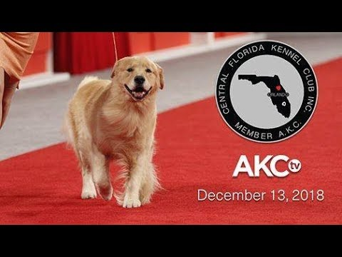 Central Florida Kennel Club All-Breed Show