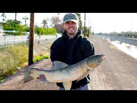 CANAL Fishing For GIANT Desert Bone Fish (Grass Carp)