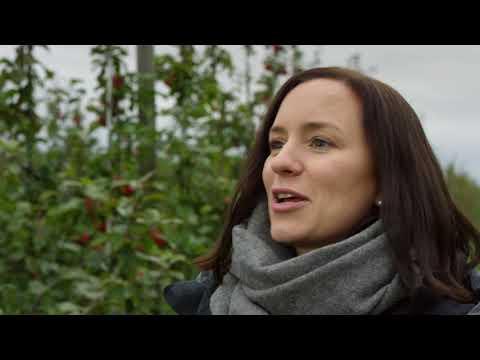 Norwegian Seafood & Fresh Made Apple Juice | Table Tales: FREDRIKSTAD
