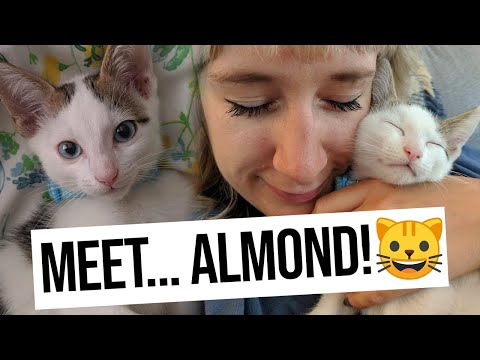Bringing Kitten Home For The First Time! Introducing To Our Older Cat... - The Adam & Bethan Show