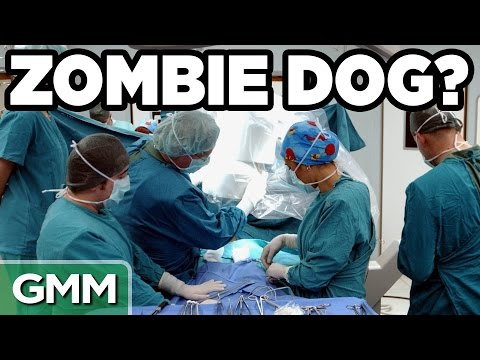 Real Life Zombie Experiments