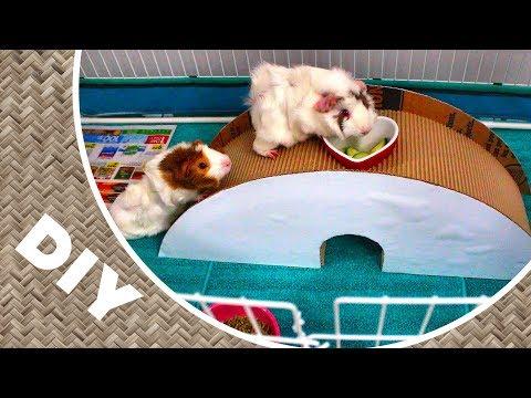FUN Guinea Pigs Toy DIY Tunnel Bridge for Playtime!