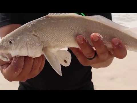 How To Catch Whiting From The Beach — SURF FISHING