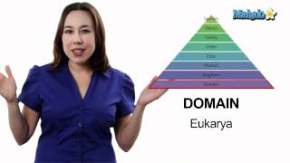 Learn Biology: Classification- The Taxonomic Hierarchy