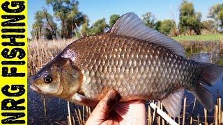 Рыбалка на крупного карася | БОКОВОЙ КИВОК просто не оторвать глаз