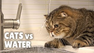 cats-vs-water