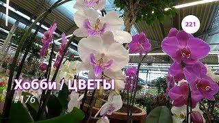 221#176 / Хобби Цветы / 11.2019 - OBI (ХИМКИ). ОБЗОР