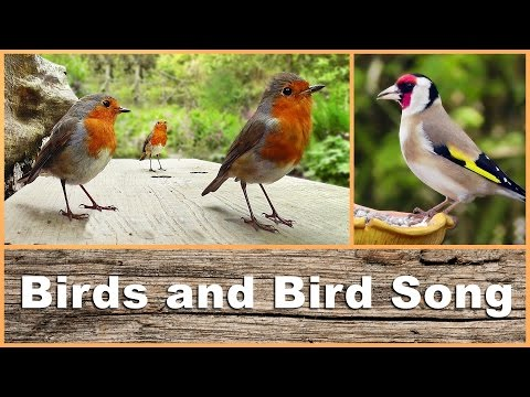 Movie for Cats : Birds Chirping and Singing Extravaganza