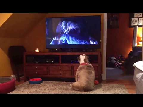 Brave Bulldog Takes On One Of Horror's SCARIEST Monsters!