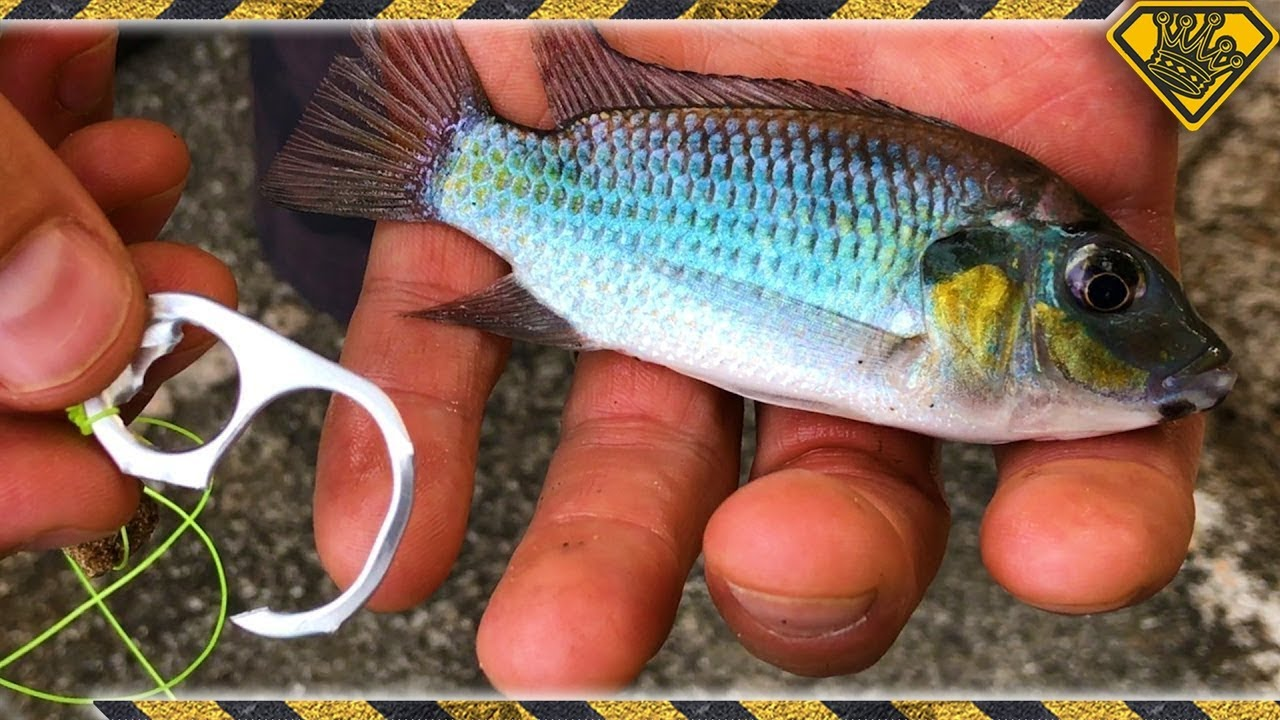d269ff61d949 Will A Soda Tab Catch Fish IRL  - YouTube