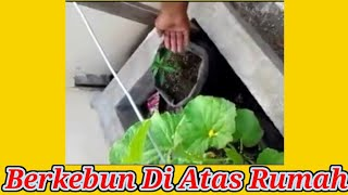 Video berkebun di atas rumah download MP3, 3GP, MP4, WEBM, AVI, FLV Juni 2018