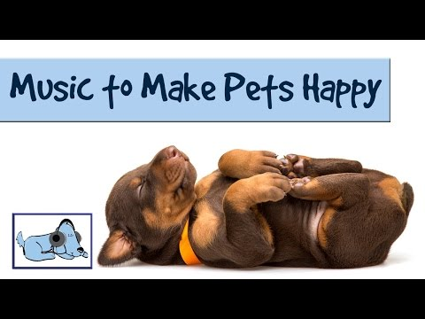 Music Makes a Happy Spaniel – Keep Dogs Happy with Music by Relax My Dog 🐶 #SPANIEL02