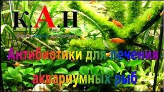 Антибиотики для лечения аквариумных рыб