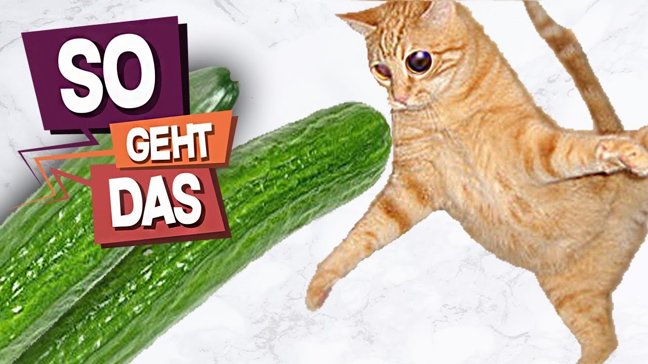 Warum Erschrecken Katzen Vor Gurken