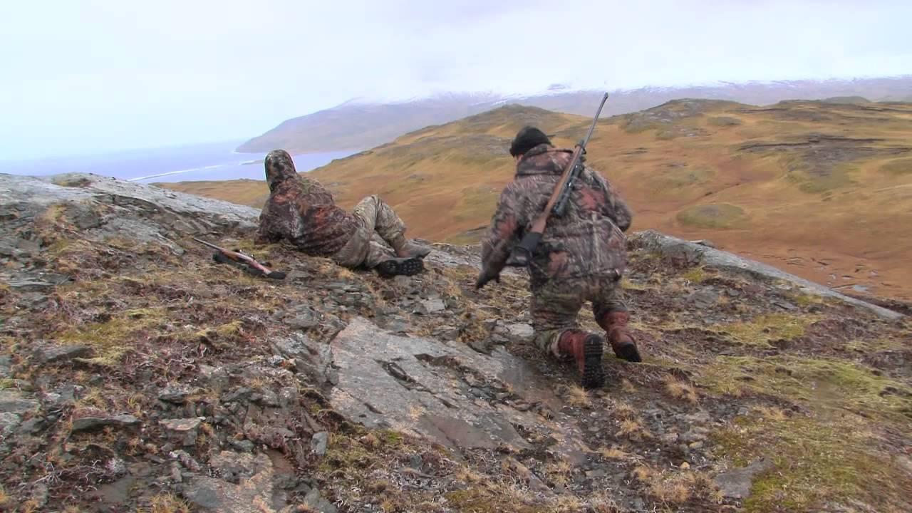 Alaska Adak Island Caribou Youtube