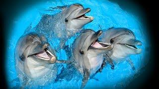 Дельфинарий в Московском зоопарке.  Зима 2014...