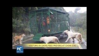 """Video Sửng sốt với sở thú """"nhốt người trong chuồng, thả rông thú dữ"""" ở Trung Quốc download MP3, 3GP, MP4, WEBM, AVI, FLV Agustus 2018"""