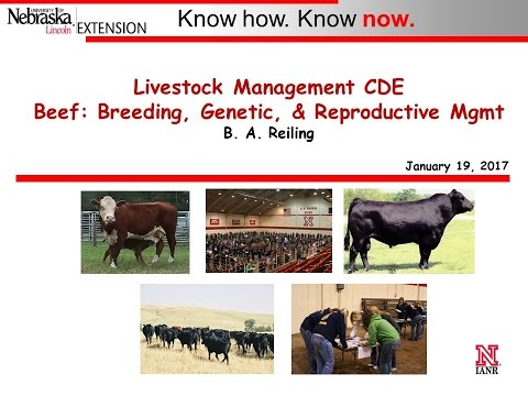 Beef - Breeding, Genetic, & Reproductive Management, 1-19-17