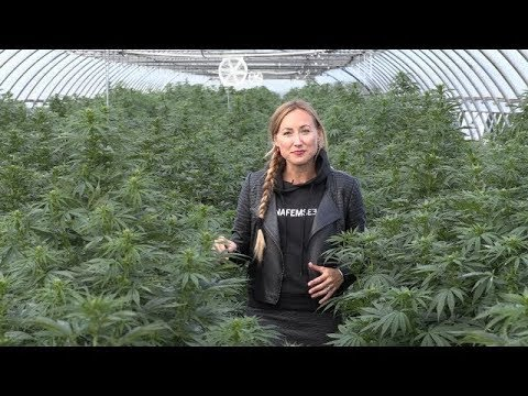 Dinafem Seeds visits medical cannabis producer Kanna Swiss (Switzerland)