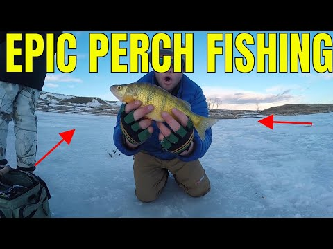ICE FISHING Montana PERCH & WALLEYE Multi-Species ICE Fishing!