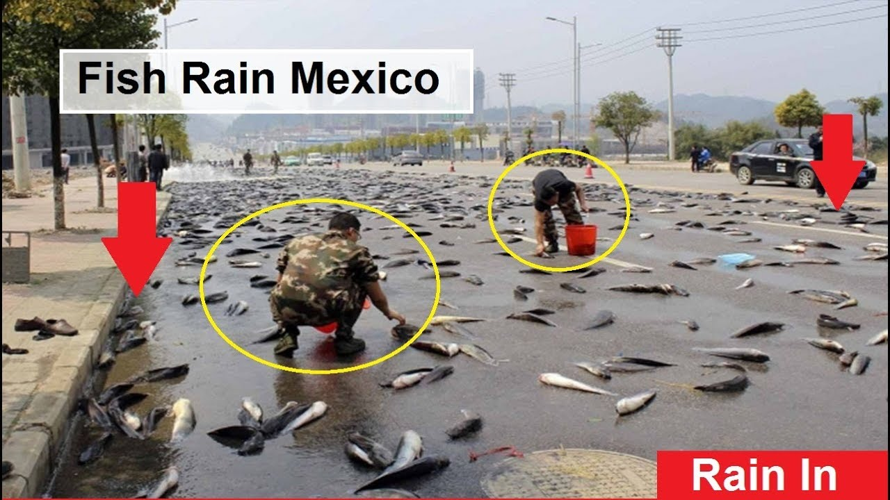 The fish rain in mexico youtube for Good fishing places near me