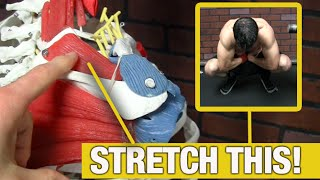 Rotator Cuff Stretches (The Ones You REALLY Need!)