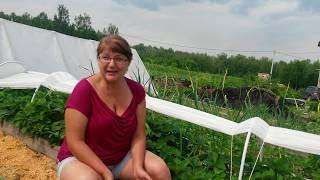 Огород,сад, хозяйство....счастлива ли я?