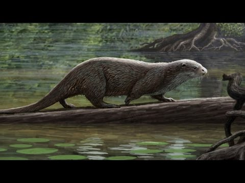 Wolf-Sized Otter Roamed Ancient China | Prehistoric News