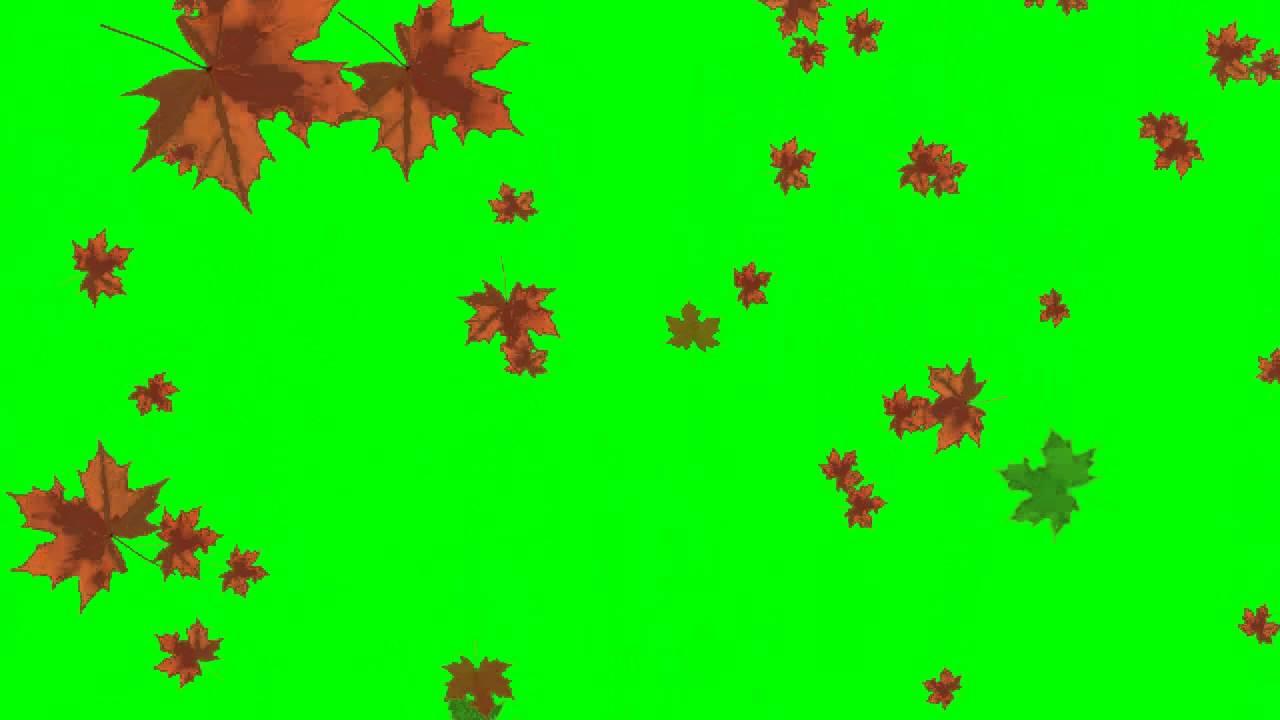 Autumn Leaf Fall Greenscreen Effects Free Use Youtube