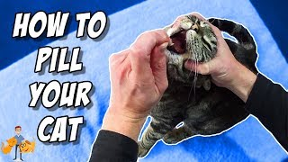 How To Pill A Cat By Yourself (like a PRO!)
