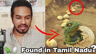 Dinosaur Eggs Found in Tamil Nadu   Madan Gowri   MG