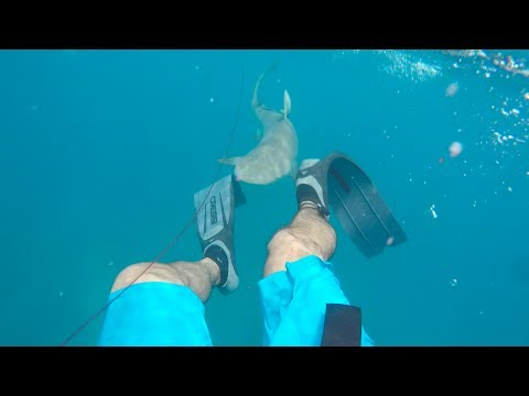 Thumbnail: Attacked By 8ft Shark Spearfishing || Florida Keys 2017