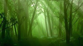 Forest Music Instrumental - Raindrop Woods
