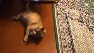 Кота прёт от валерьянки.