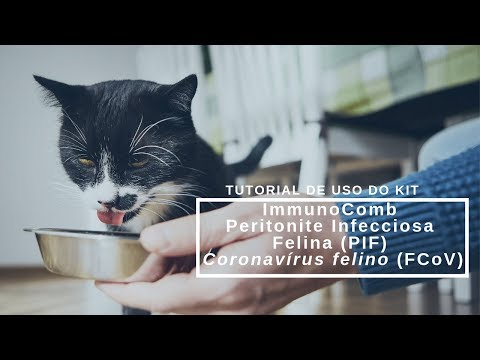 Tutorial De Uso Do Kit ImmunoComb Peritonite Infecciosa Felina (PIF) Coronavírus Felino (FCoV)