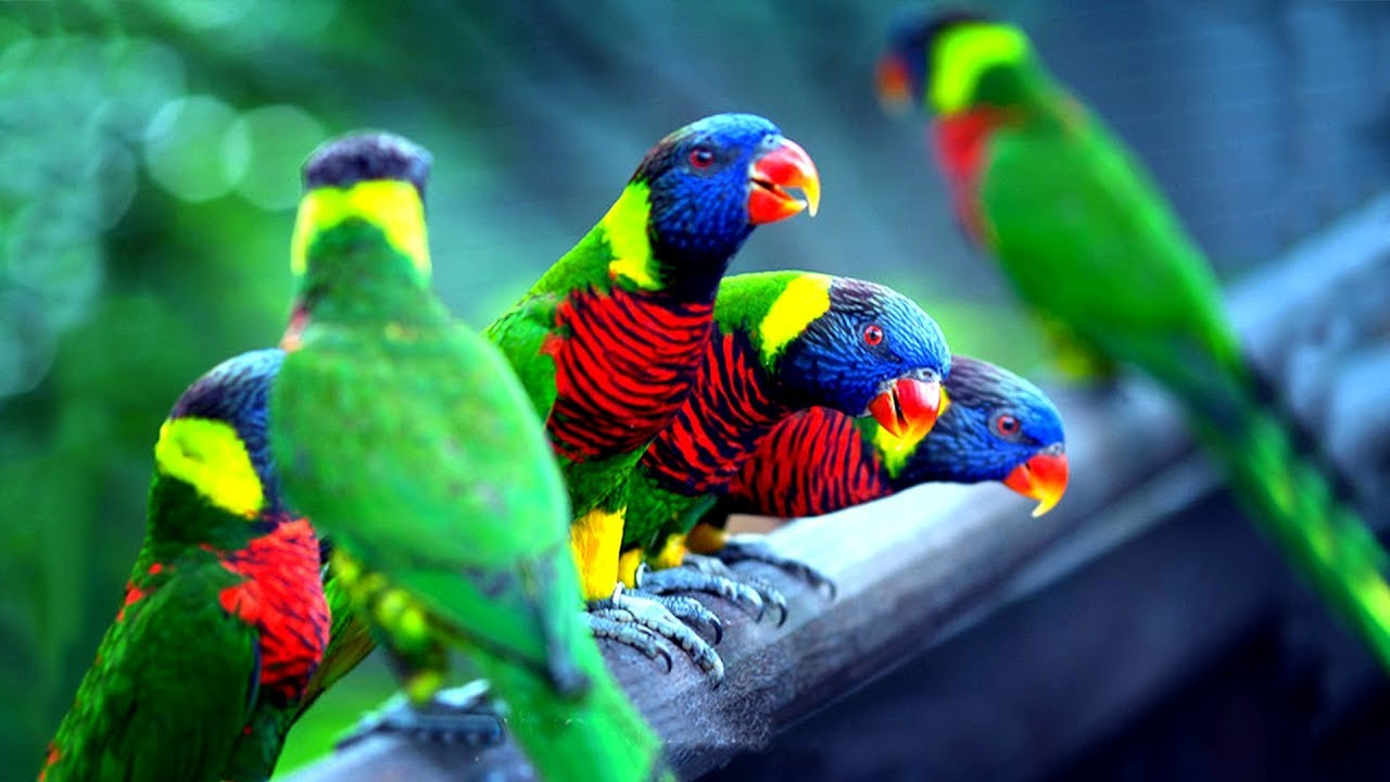 চমৎকার ১০টি পাখি | Top 10 Most Colorful Birds Part-1 | Stunningly Beautiful Birds | Exotic Birds