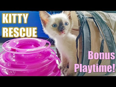 kitty-playtime-(day-15-afternoon-bonus!)-😻🙌🏼