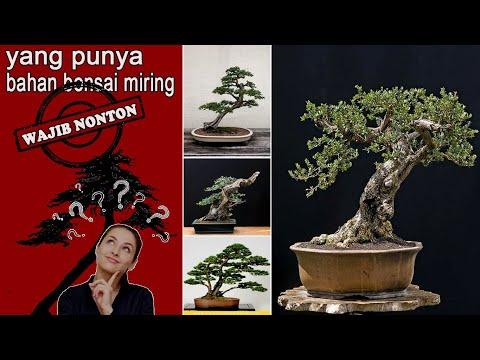 70-contoh-bonsai-dengan-gaya-miring-/-condong
