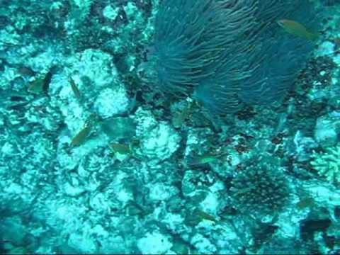 xav-photo.blogspot.com, kuredu, maldives, plongée, diving
