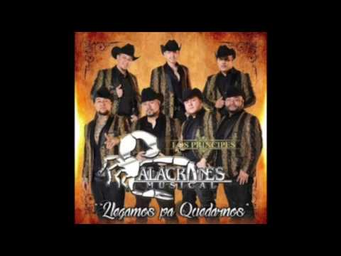Mi Caballo Ensillado - Alacranes Musical