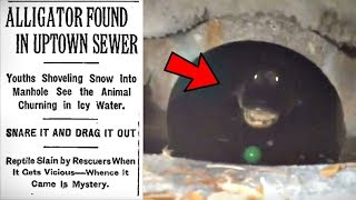 5 Most Compelling Pieces Of Sewer Alligator Evidence